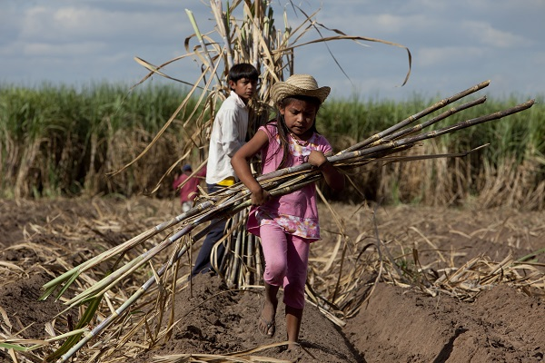 Children forced to work in fields.